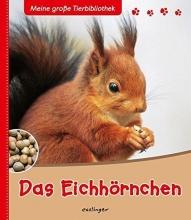 Ledu-Frattini, Stéphanie,   Brauner, Anne Das Eichhörnchen