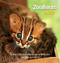 Bleiman, Andrew,   Eastland, Chris Zooborns Cats!