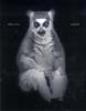Eliott  Ross, ,Animal