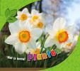Martha  Rustad ,Het is lente! Planten in de lente