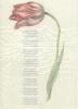 Jana  Beranová ,Set van 10 A4 poëzieposters Ik wens je een tafel Jana Beranova