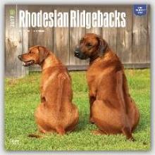 Rhodesian Ridgebacks - Afrikanischer Lwenhund 2017 - 18-Monatskalender mit freier DogDays-App