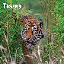 Inc Browntrout Publishers Tigers 2020 Square Wall Calendar