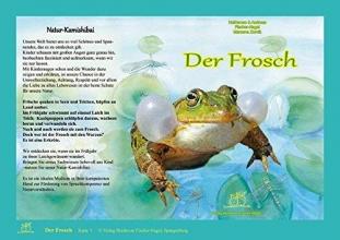 Fischer-Nagel, Heiderose Der Frosch. Natur-Kamishibai