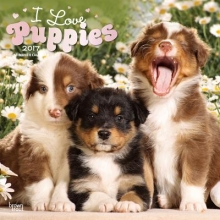 Browntrout Publishers, Inc Puppies, I Love 2017 Square