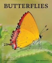 Orenstein, Ronald I. Butterflies
