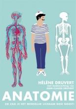 Hélène  Druvert Anatomie