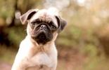 ,<b>Onderlegger Kangaro 44x68cm hond</b>
