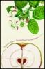 Hagena, Katharina,Der Geschmack von Apfelkernen