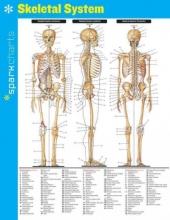 Sparkcharts Skeletal System