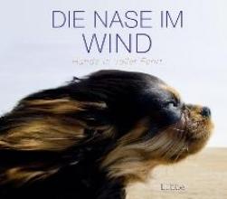 Die Nase im Wind