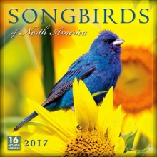 Sellers Publishing, Inc Cal 2017-Songbirds of North America