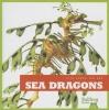 Meister, Cari,Sea Dragons