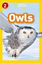 Laura Marsh Owls