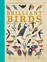 Qed Publishing Brilliant Birds