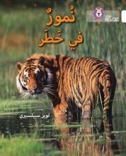 Louise Spilsbury Tigers in Danger