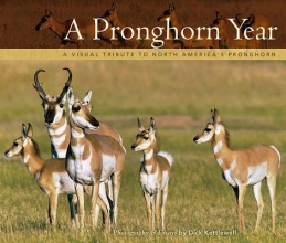 A Pronghorn Year