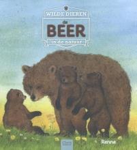 Renne Wilde dieren in de natuur. De beer