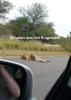 Egon  Berendsen,Op safari door het Krugerpark