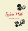 Aurelia Plath, Sylvia Plath Drawings