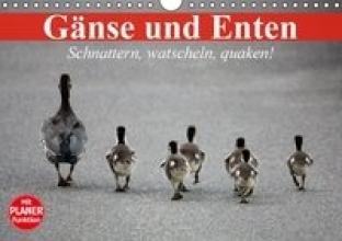 Stanzer, Elisabeth G?nse und Enten. Schnattern, watscheln, quaken! (Wandkalender 2016 DIN A4 quer)