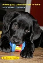 Ondine de Hullu , Drukke pup? Daar is iets aan te doen!