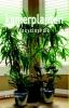 Nico  Vermeulen,Kamerplanten encyclopedie