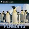 Simon, Seymour,Penguins