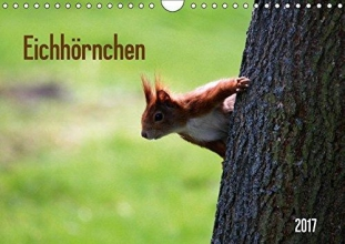SchnelleWelten Eichhörnchen (Wandkalender 2017 DIN A4 quer)