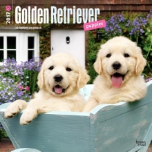 Browntrout Publishers, Inc Golden Retriever Puppies 2017 Square