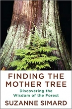 Suzanne Simard, Finding the Mother Tree