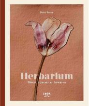 Daisy Ranoe , Herbarium