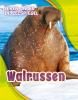 <b>Kari  Schuetz</b>,Walrussen, Leven onder de Zeespiegel