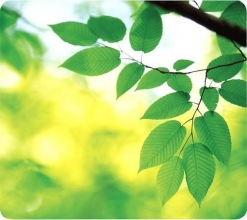 , Muismat Fellowes natuur collectie bladeren