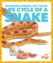 Karen Kenney Life Cycle of a Snake