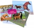 <b>Paarden ansichtkaartenboek</b>,