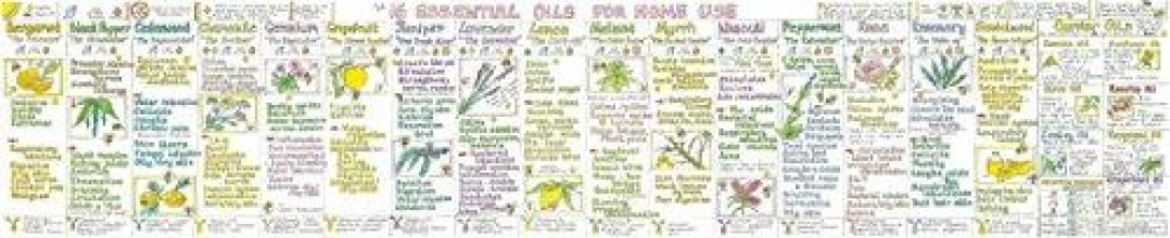 Liz Cook,   Bee Ballantyne Essential Oils for Home Use