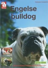 A. Louwrier , Engelse bulldog