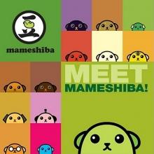 Shepherd, Carrie Meet Mameshiba!