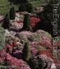 ,The English Garden