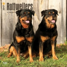 Browntrout Publishers, Inc Rottweilers 2017 Square