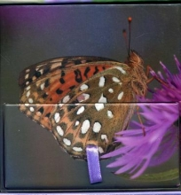 Peony Press Painted Lady Butterfly