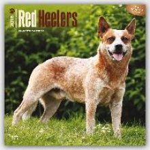 Red Heelers 2016 Calendar