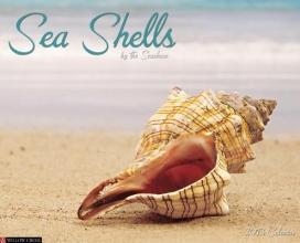 Sea Shells Calendar
