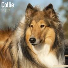 Avonside Publishing Ltd. Collie Calendar 2017