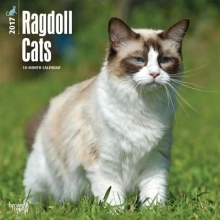 Browntrout Publishers, Inc Ragdoll Cats 2017 Square
