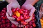 Heistinger, Andrea,Bio-Gemüse-Ratgeber