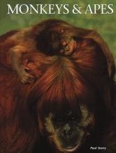 Paul Sterry Monkeys & Apes