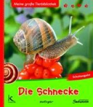 Starosta, Paul Die Schnecke