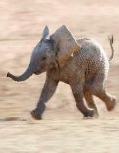 Elephants Blankbook